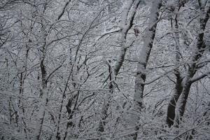 SnowInWoods1Smaller