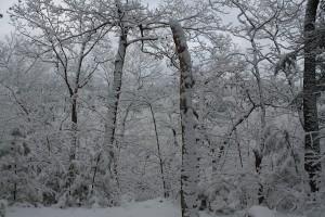 SnowInWoodsSmaller